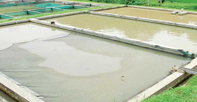 Kolam Ideal Produksi Nila