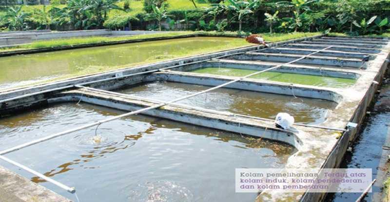Kolam Pemeliharaan Nila