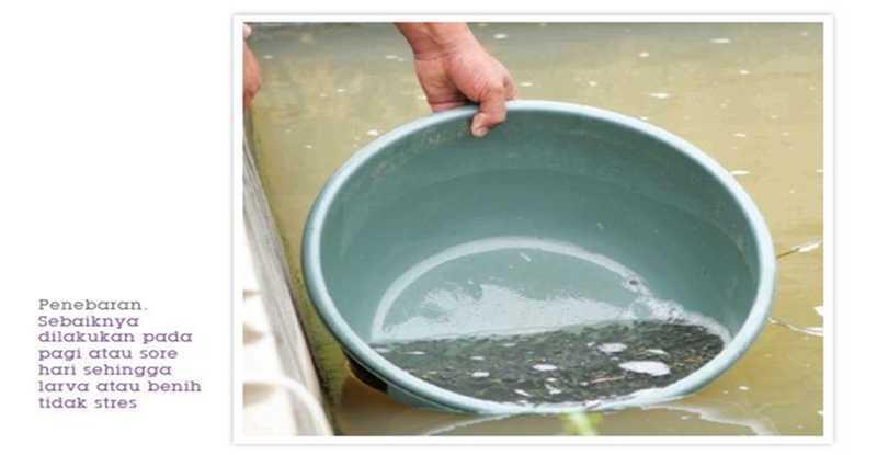 Kolam Pendederan Nila