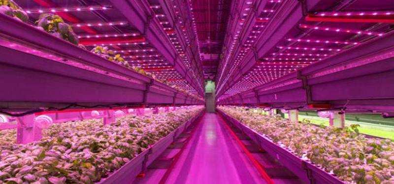Lampu LED Teknologi Baru Pertanian