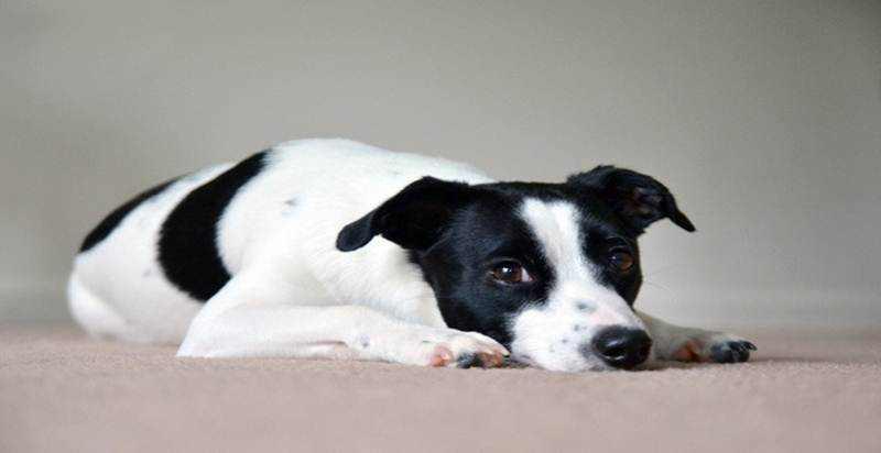 Memehami Arti Helaan Napas Anjing