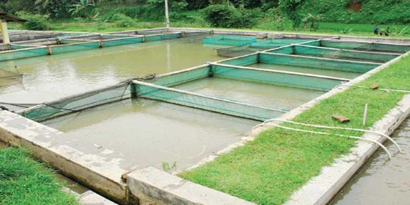 Memilih Lokasi Produksi Nila