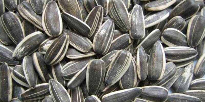Mengonsumsi Kuaci dapat Menurunkan Kadar Kolesterol