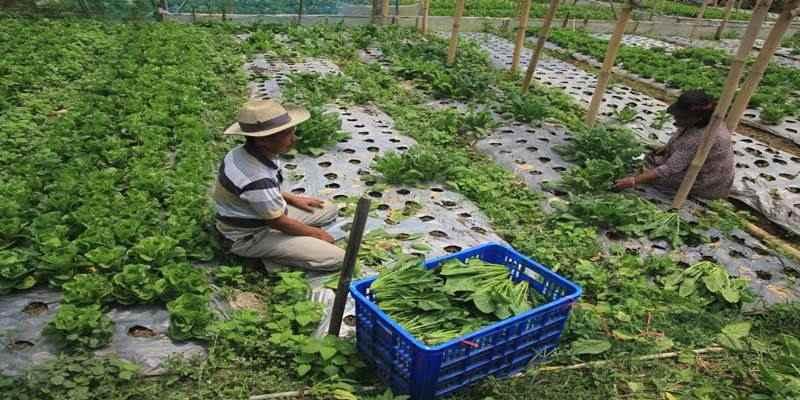 Pemerintah Diminta Serius Garap Sektor Holtikultura