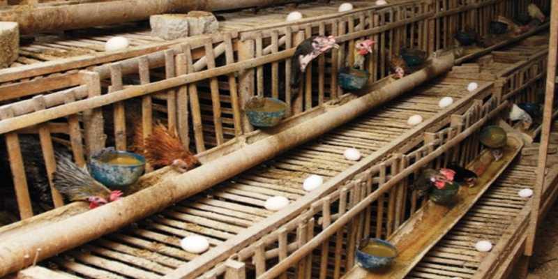 Perkiraan Kebutuhan Tenaga Kerja Kandang Ayam Petelur