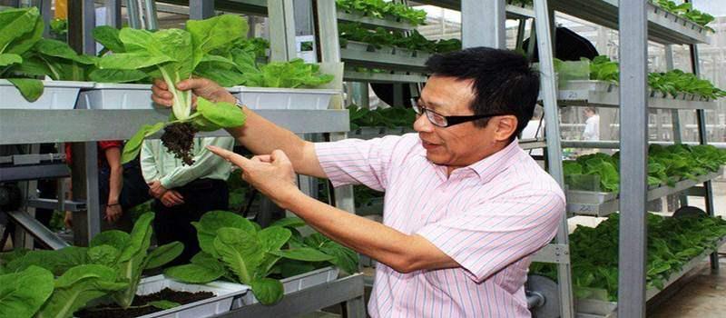 Vertikal Farm Ala Singapura