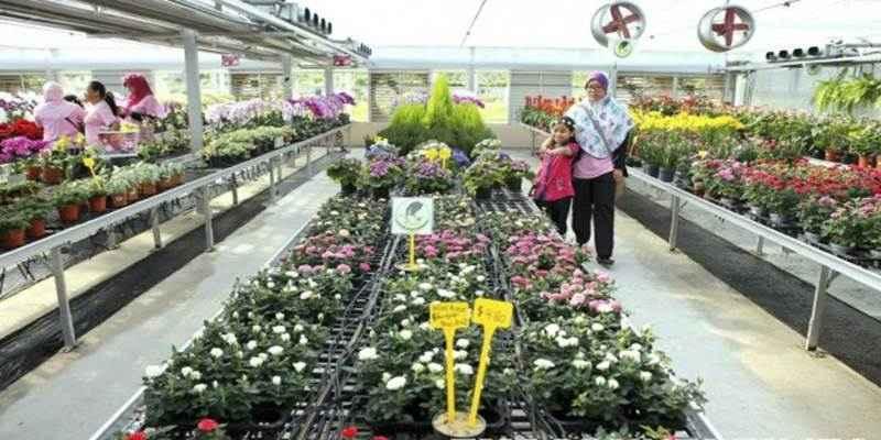 Yogyakarta Punya Agro Techno Park