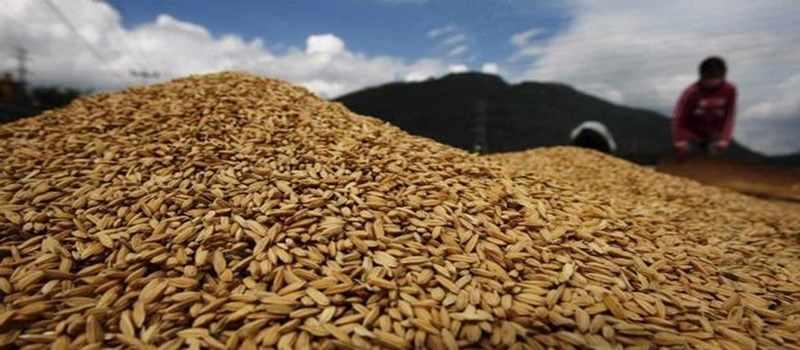AS Dukung Kebijakan Sektor Pangan dan Pertanian RI