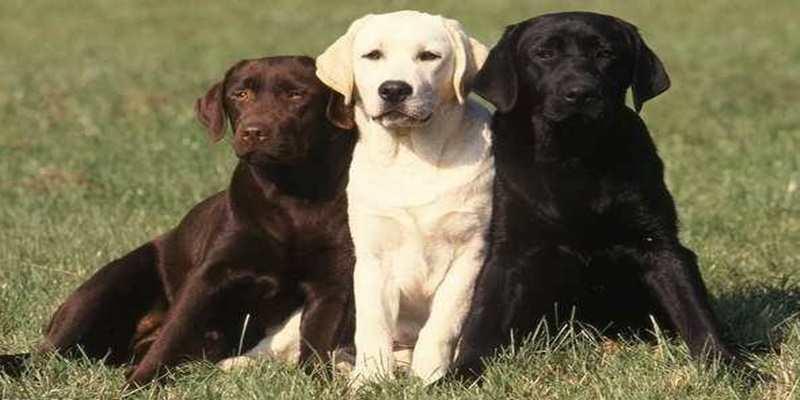 Anjing dapat Mendeteksi Kanker