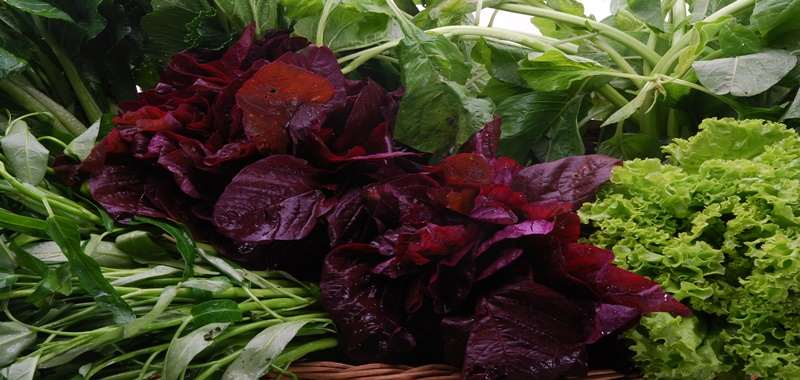 Belanja Sayuran Organik, Kini dapat Melalui Smartphone