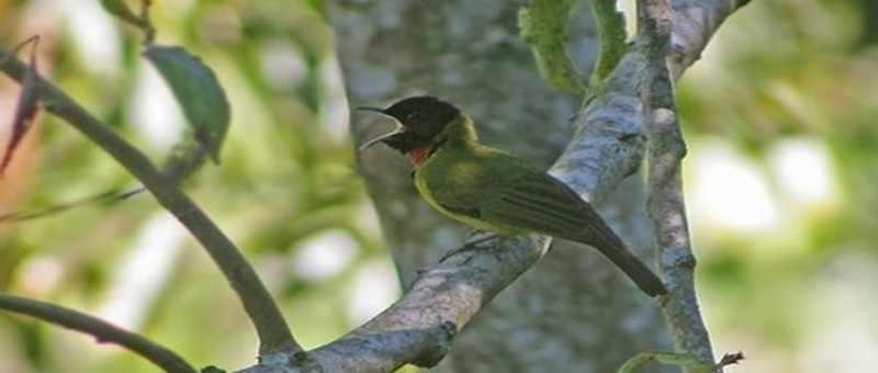 Burung Garugiwa, Si Penjaga Arwah di Danau Kelimutu
