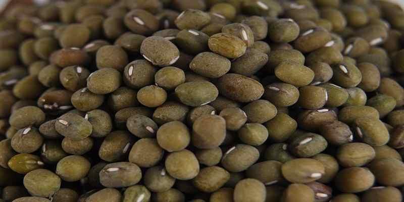 Kacang Hijau Bermanfaat Menurunkan Kadar Kolesterol Jahat