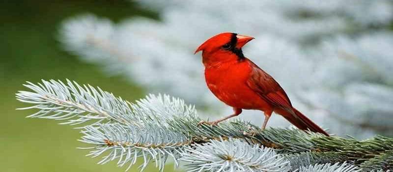 Kebutuhan Karbohidrat Burung