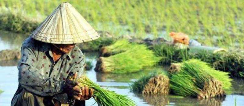 Kementan Atasi Lahan Kering Pertanian