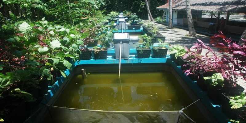Mencoba Bumina Yumina, Budidaya Ikan dan Berkebun