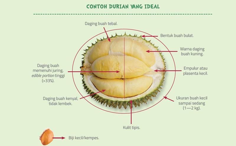 Mengenal Asal Usul 'si Raja Buah', Durian