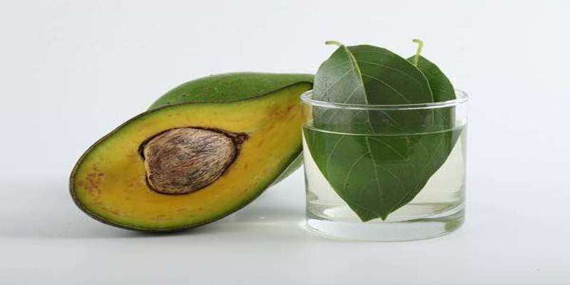 Mengenal Kandungan Alkaloid dalam Avokad