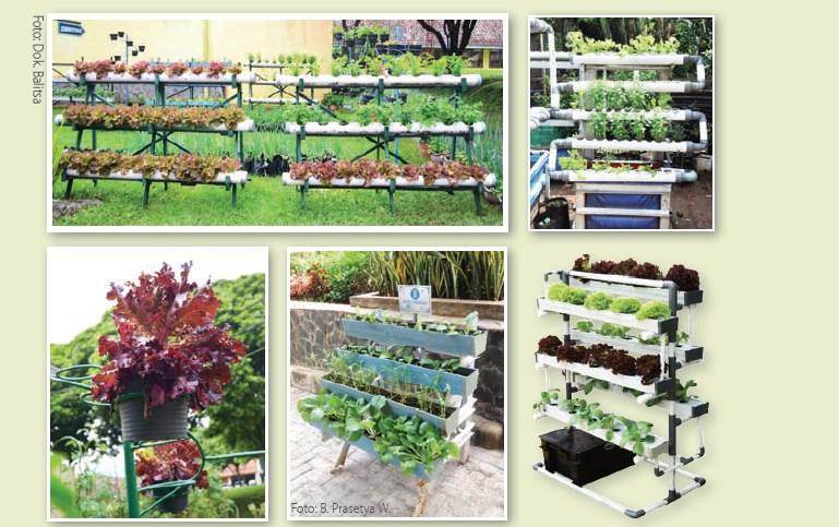 Pentingnya Jenis Sayuran Dalam Vertikultur