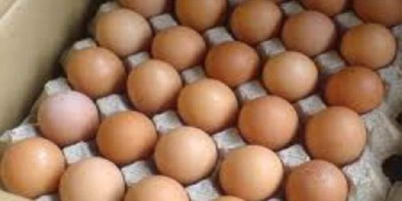 Pentingnya Pengemasan Hasil Panen Telur Ayam Kampung