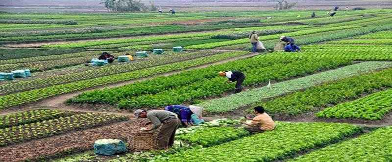 Perkembangan Pertanian Organik di Indonesia