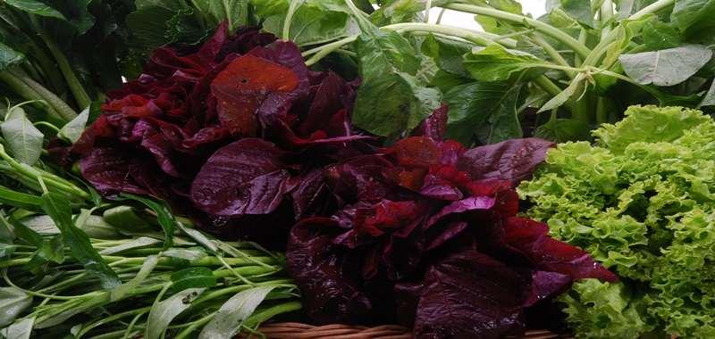 Pilih Organik Atau Hidroponik, Jika Mengonsumsi Sayuran Mentah