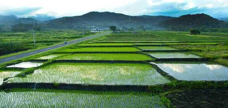Sektor Pertanian Indonesia Terus Digenjot