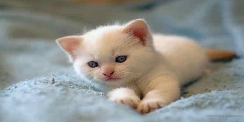 Tips Merawat Bayi Kucing Tanpa Induk