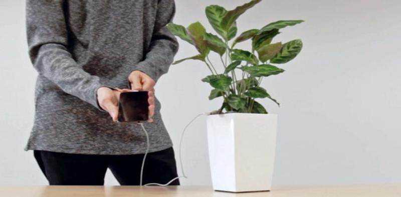 Wow Pot Tanaman ini Mampu Mengisi Baterai Ponsel