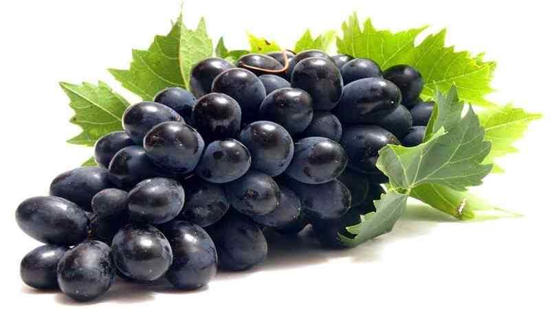 Mengenal Sifat Botani Anggur