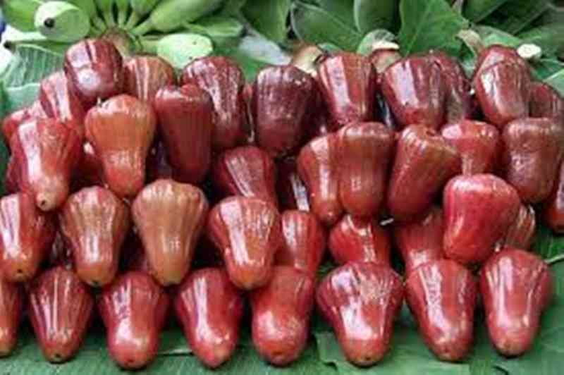 jambu air 4