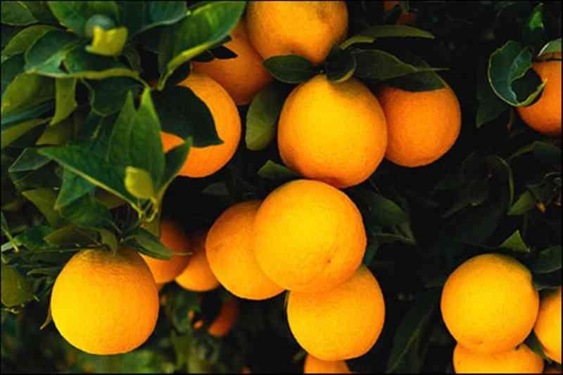 jeruk 8