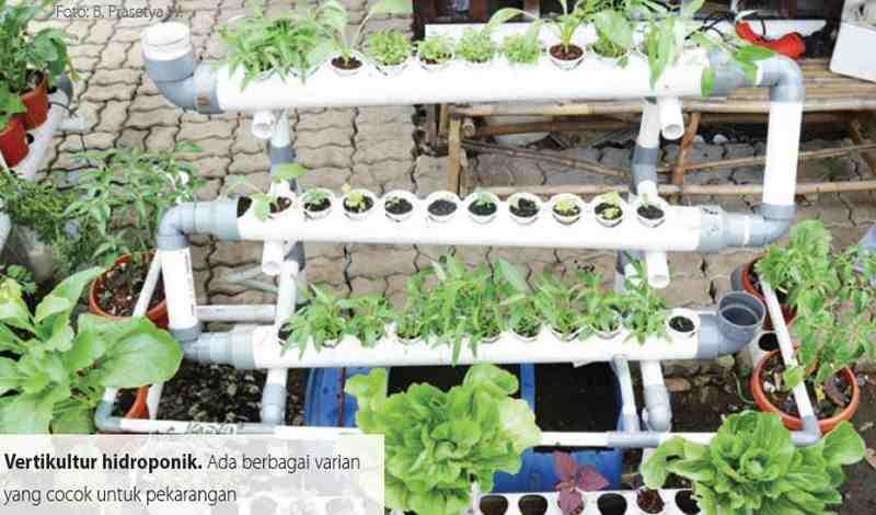 Inilah Keuntungan Bertanam Secara Hidroponik Artikel Pertanian