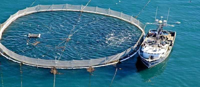 Budidaya Ikan Tuna yang Menjanjikan