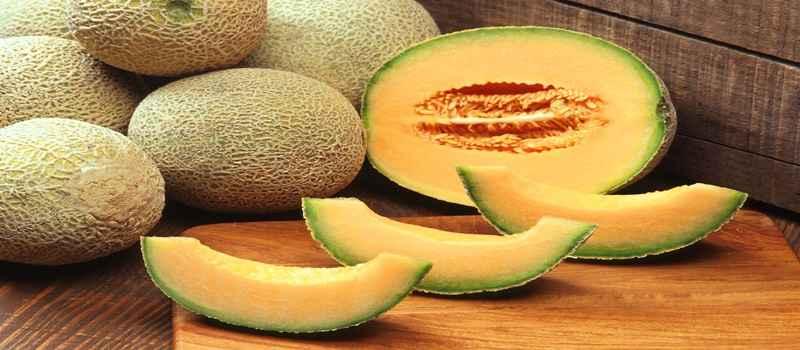 Mempelajari Budidaya Melon Cantaloupe
