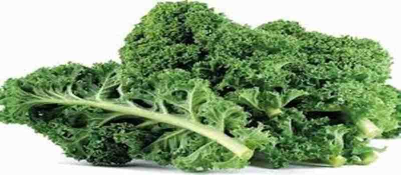 Mengenal Manfaat Sayur Kale