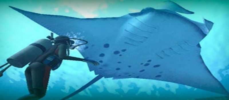 Satwa Bawah Laut Nan Eksotis, Ikan Pari Manta