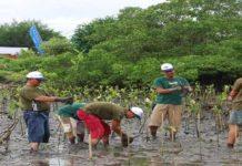 Yuk Belajar Budidaya Mangrove