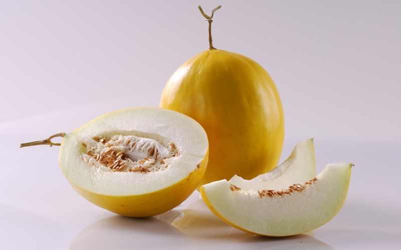 Budi Daya Melon dengan Sistem Hidroponik