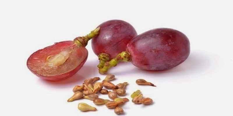 Inilah Khasiat Biji Anggur