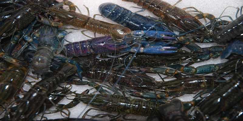 Inilah Manfaat Seafood untuk Kesehatan Tulang dan Gigi