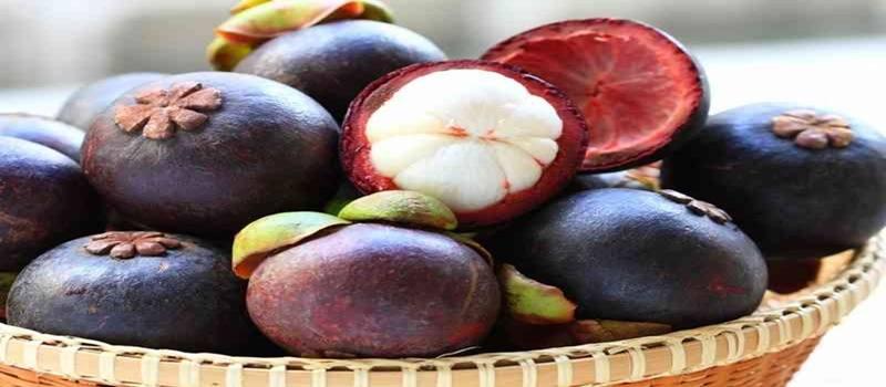 Khasiat Manggis Untuk Mengobati Penyakit HIV dan Stroke