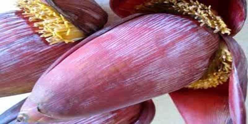 Manfaat Bunga Pisang untuk Kesehatan