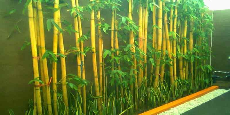 Mudahnya Budi Daya Bambu Panda