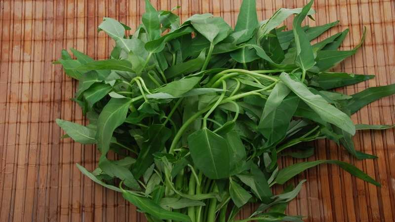 Image result for manfaat kangkung untuk ayam