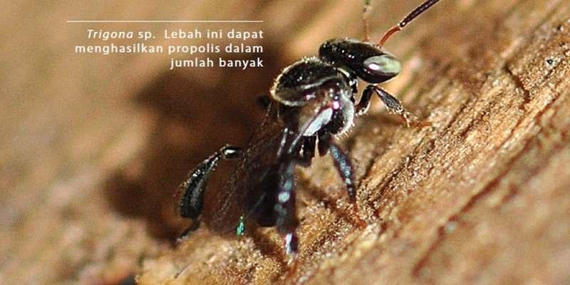 Hal yang Harus Diperhatikan Saat Budi Daya Lebah
