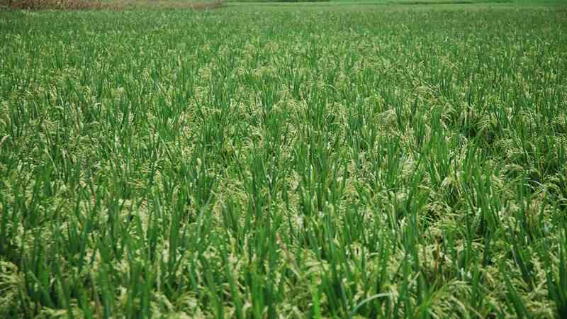 Singapura Lirik Industri Pertanian Jawa Barat