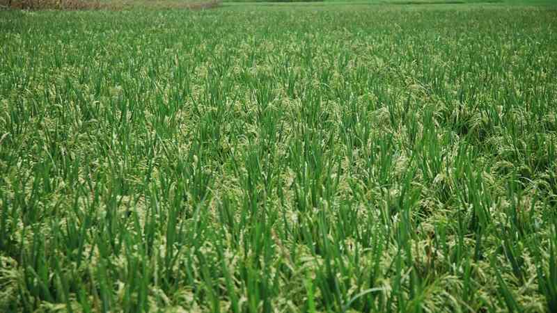 Indonesia Dan Ukraina Sepakat Jalin Kerja Sama Di Bidang Pertanian