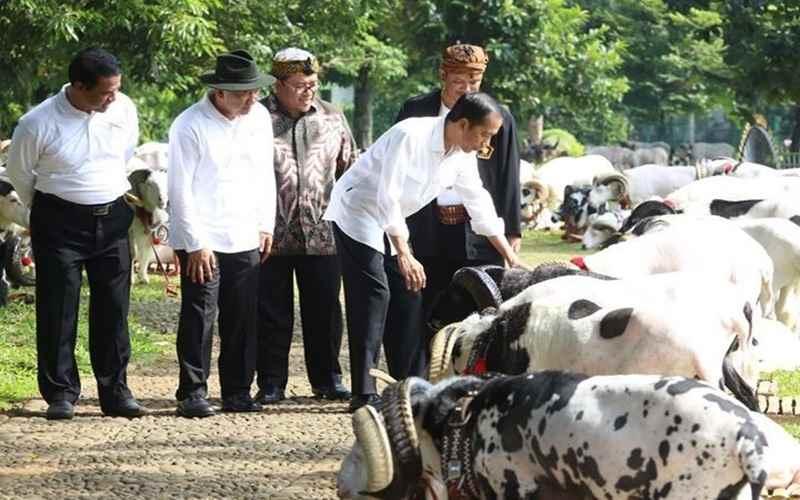 Jokowi Berjanji Lindungi Plasma Nutfah Domba Garut