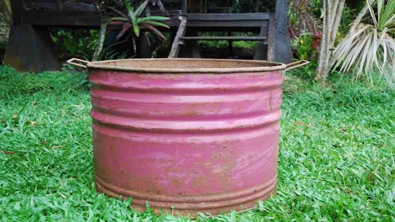 Keunggulan dan Kelemahan Membudidayakan Tanaman di Pot Drum