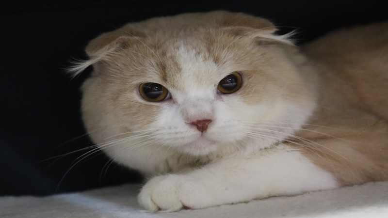 Kucing Hewan Super Lucu yang dapat Hindarkan Anda dari Serangan Jantung